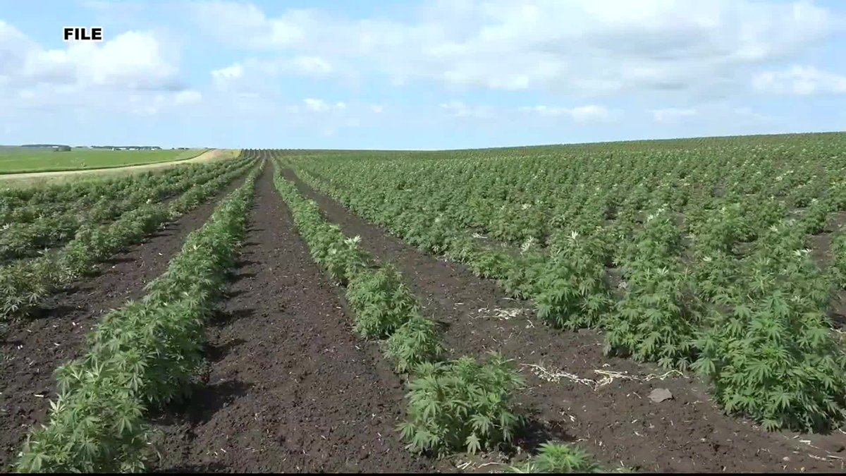Hemp rules for state going to the USDA
