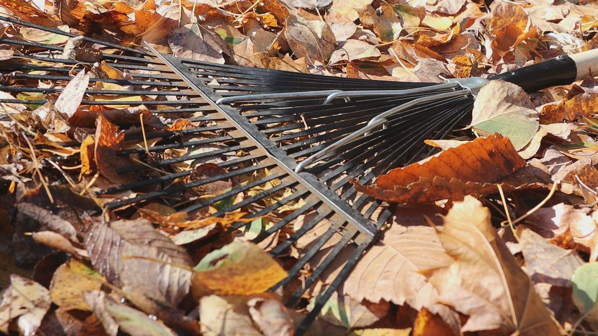 The annual Rake the Town event is the first weekend in November.