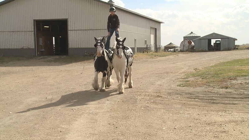 A 12-year-old girl started Roman riding because of a television show on Netflix.