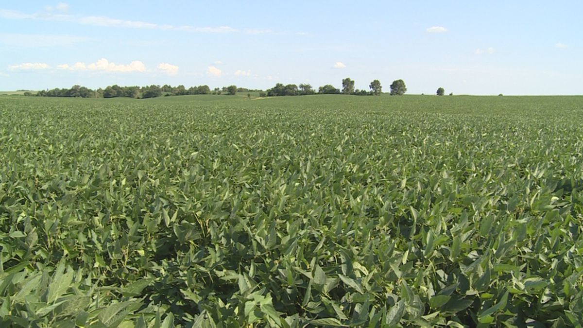 Farmers who are planning for a crop of soybeans are getting ready to get the seeds in the ground.
