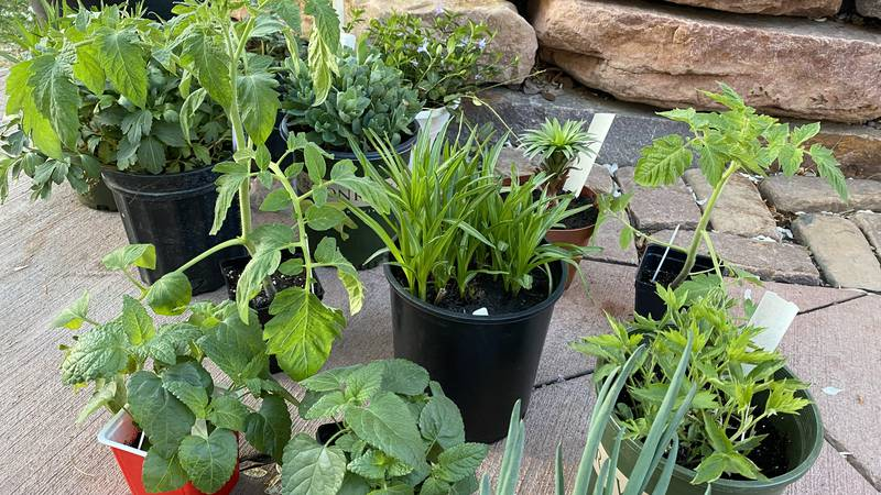 The Minnehaha Master Gardeners will hold their annual plant sale Saturday at the W.H. Lyon...