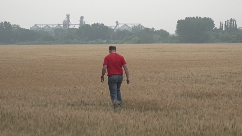 Farmers deal with drought and hail