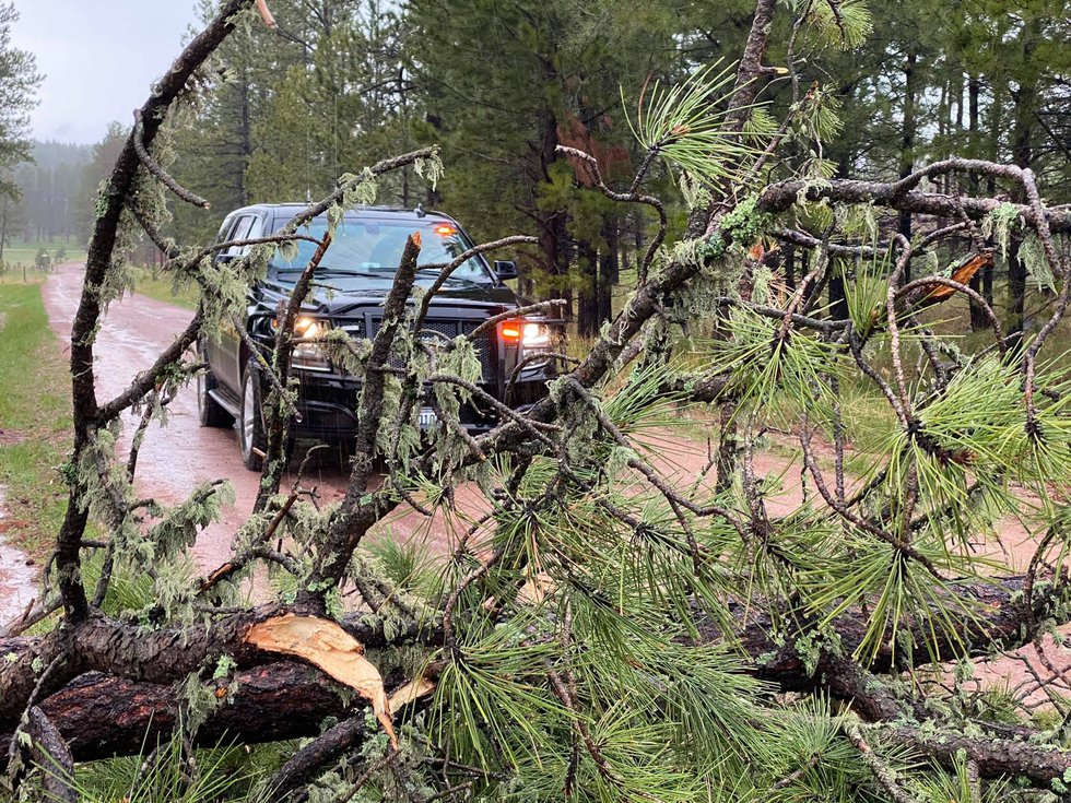 Downed tree blocks a road in the southern Black Hills.