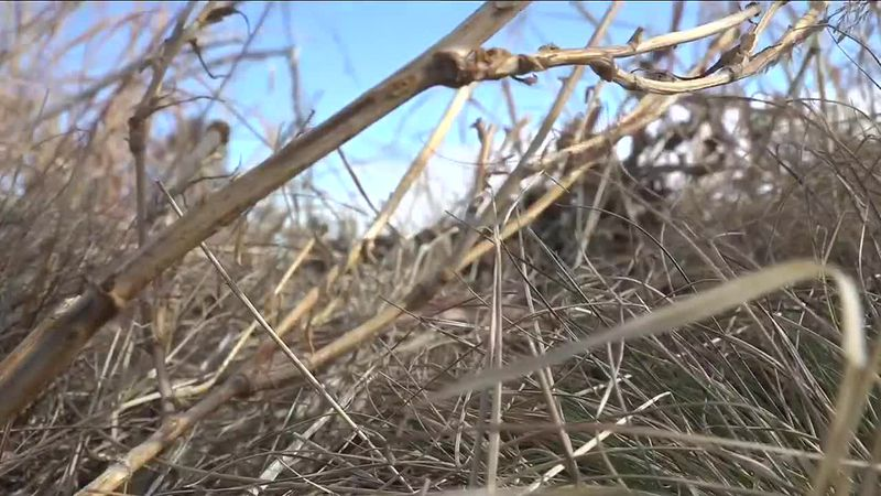 Persistent drought conditions are expected to continue.