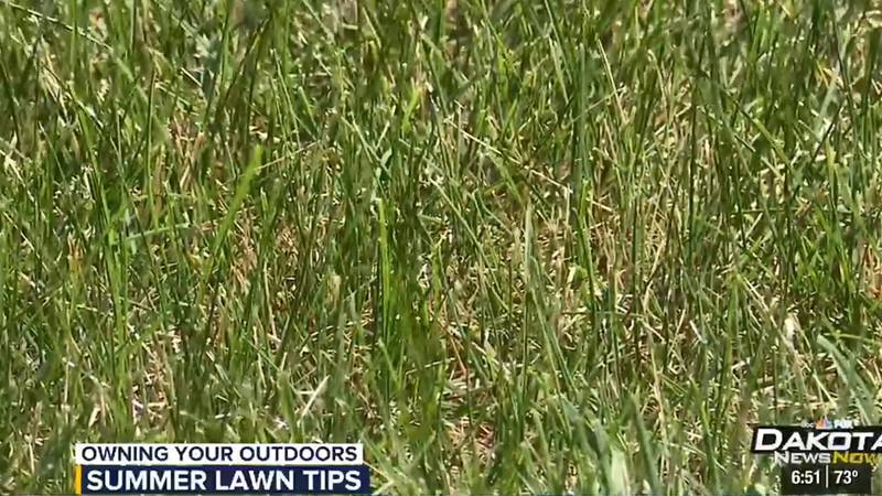 OYO Grass