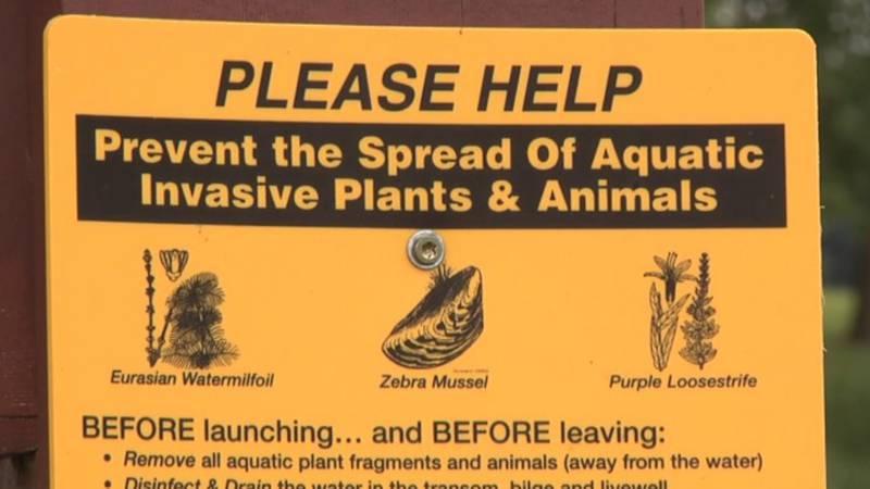 Zebra mussels are an invasive species that has begun spreading in South Dakota
