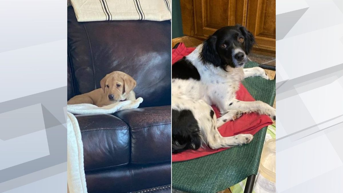 Sioux Falls Police have made an arrest in connection with a stolen car that had two dogs...