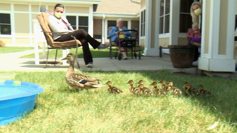 Good Samaritan residents gather for annual spring visit from mother duck