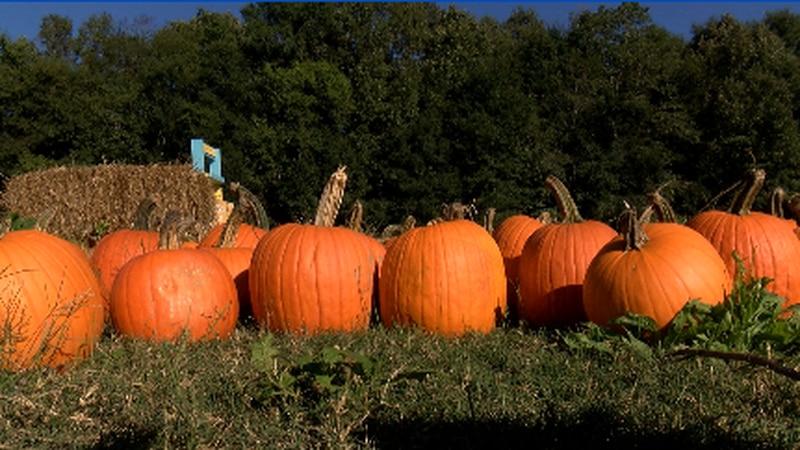 Recipes with pumpkins