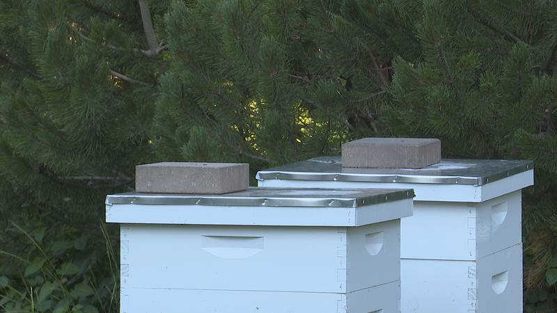 The dry start to the year started a domino effect on bee populations in the state.
