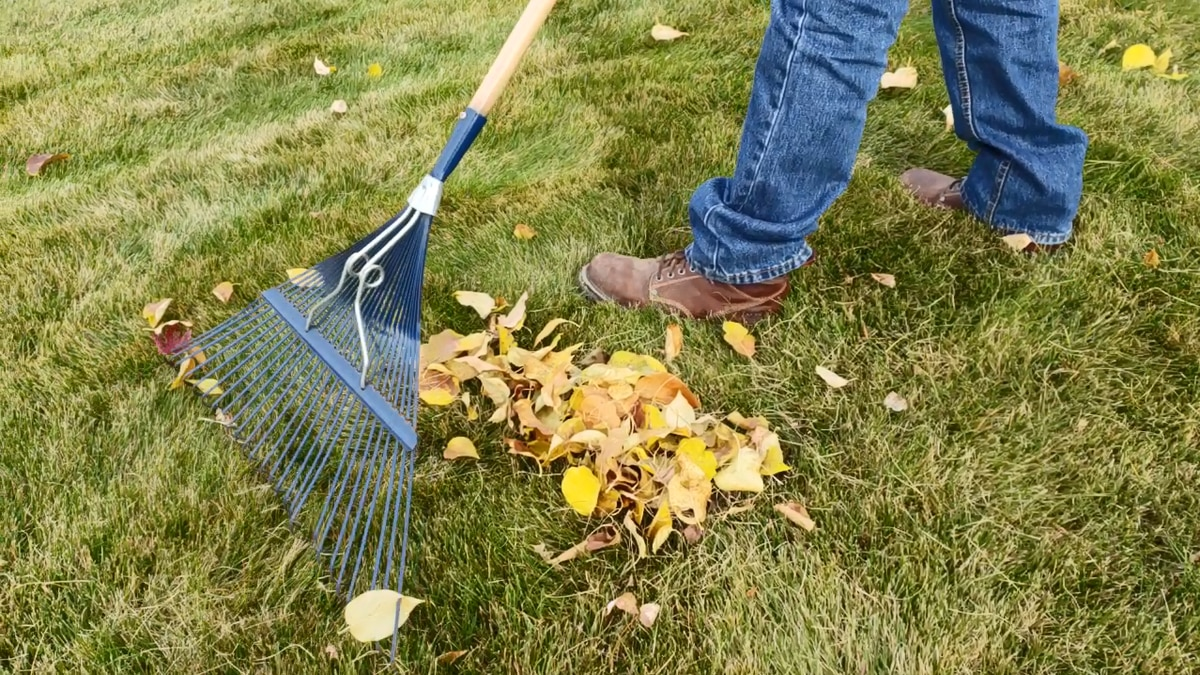 You should always rake your leaves in the fall. Do not leave them on your yard through the...