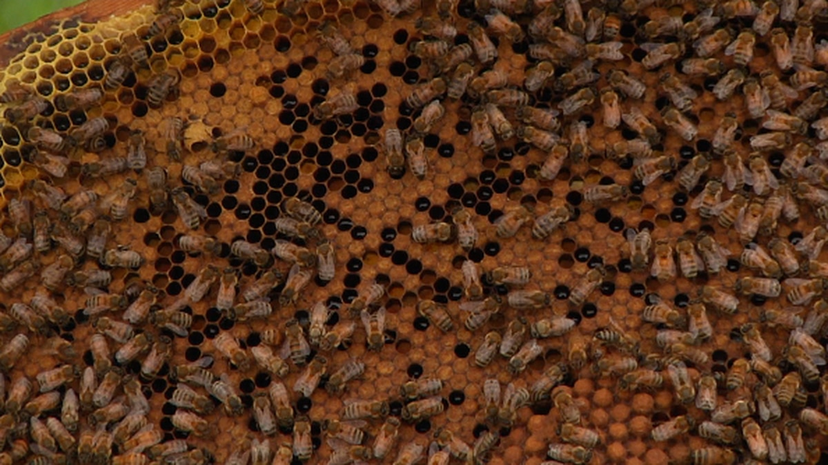 Sioux Falls residents can now keep beehives on their property. The beekeeping ordinance went...