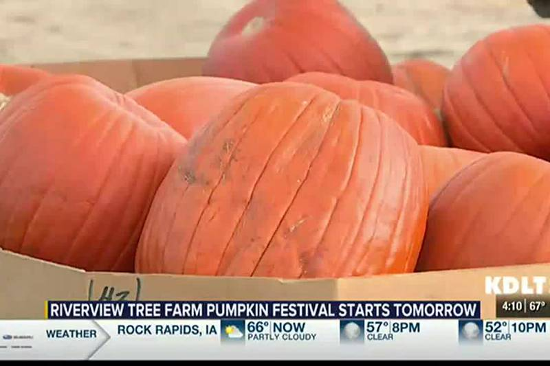 Riverview Christmas Tree Farm to hold Pumpkin Festival Starting this Weekend