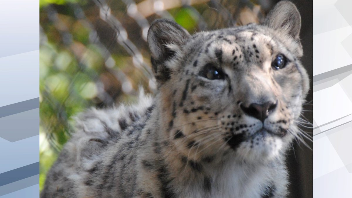 The zoo says Baya began exhibiting a cough and lethargy over the weekend.