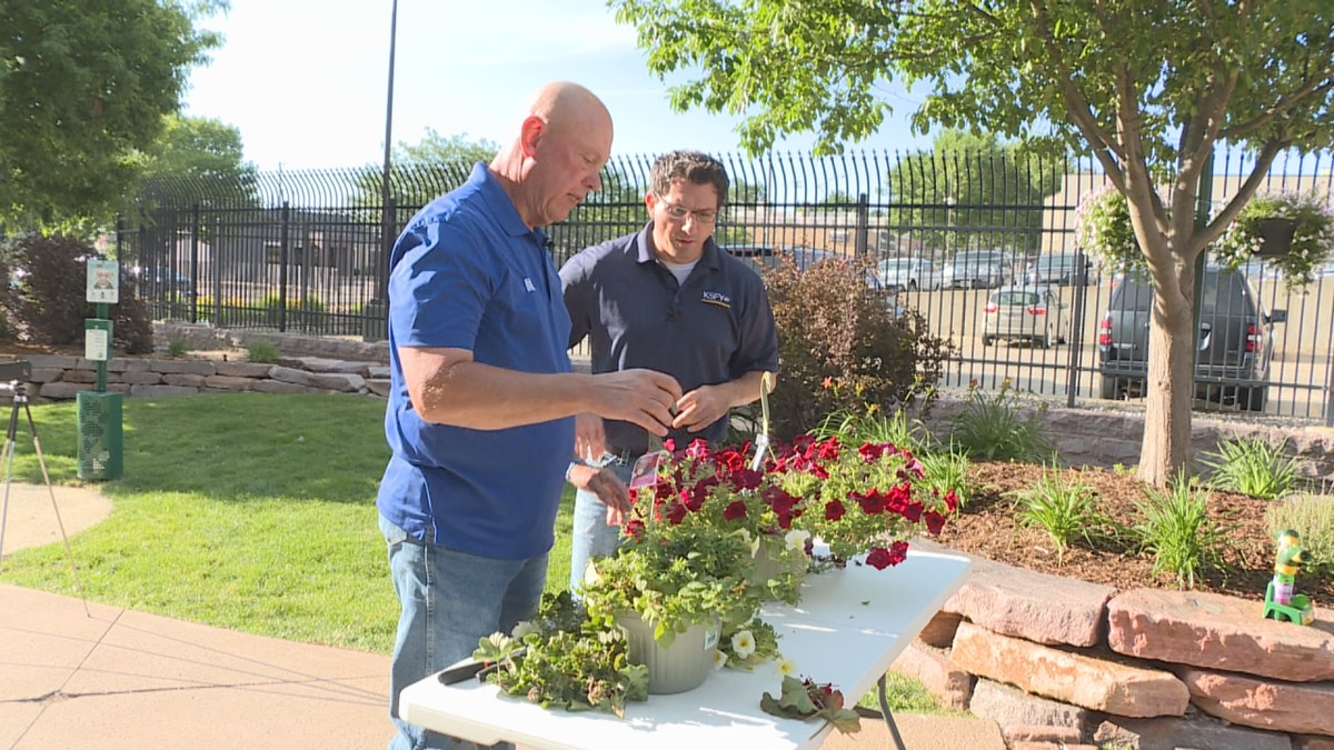 Lewis yard and garden manager Doug Schroeder says you shouldn't be afraid to prune your plants. If you cut them back beyond the blooms, flowers will come back quickly.